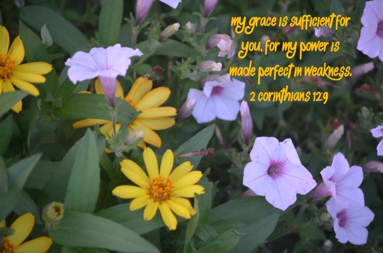 My grace flower